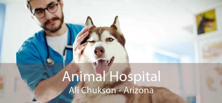 Animal Hospital Ali Chukson - Arizona