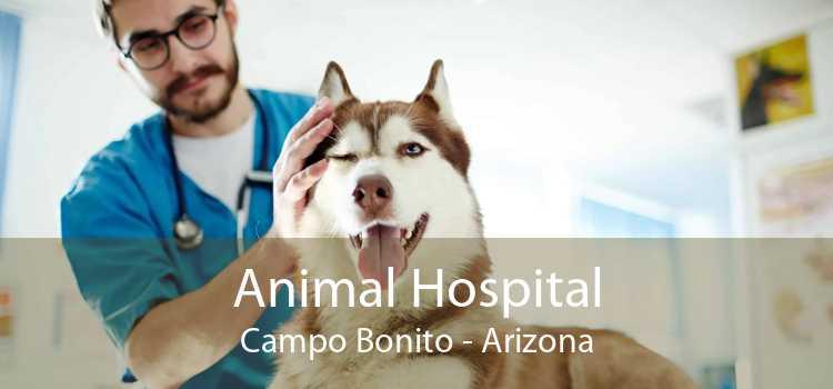 Animal Hospital Campo Bonito - Arizona