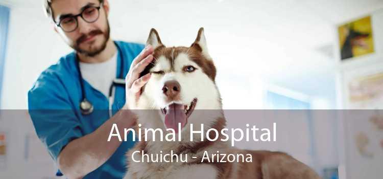 Animal Hospital Chuichu - Arizona