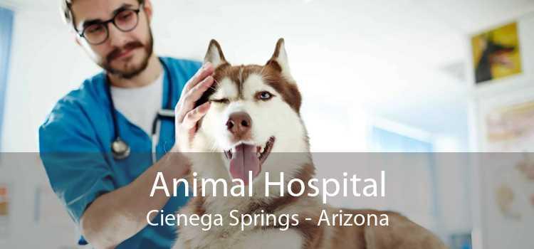 Animal Hospital Cienega Springs - Arizona