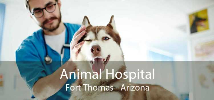 Animal Hospital Fort Thomas - Arizona