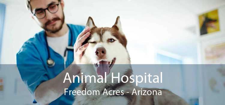 Animal Hospital Freedom Acres - Arizona
