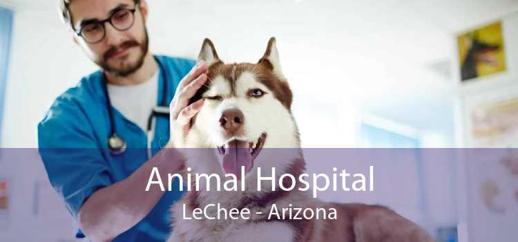 Animal Hospital LeChee - Arizona