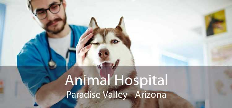 Animal Hospital Paradise Valley - Arizona