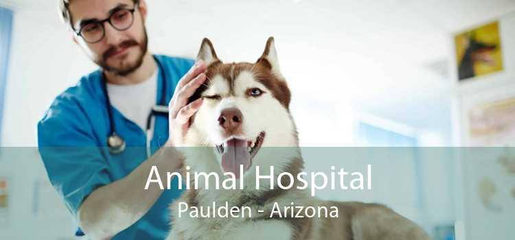 Animal Hospital Paulden - Arizona