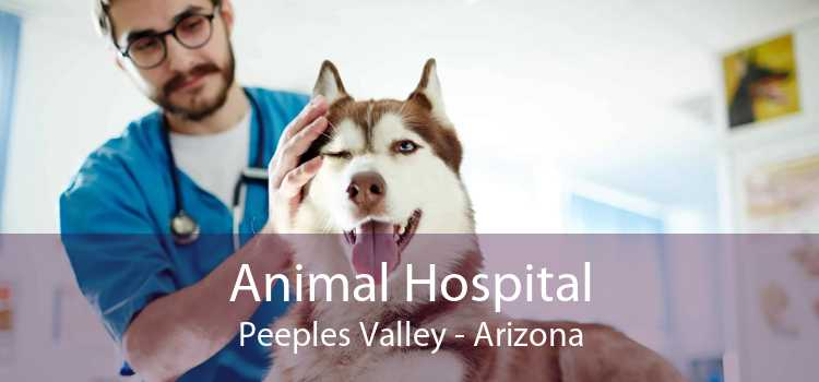 Animal Hospital Peeples Valley - Arizona