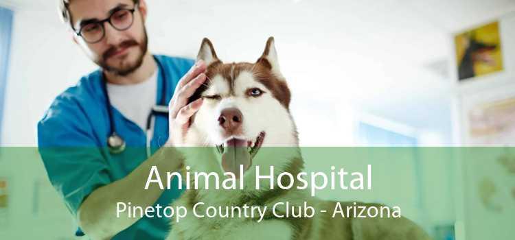 Animal Hospital Pinetop Country Club - Arizona
