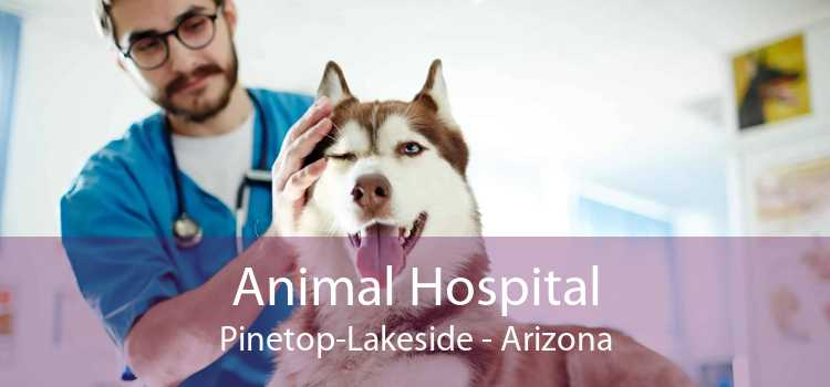 Animal Hospital Pinetop-Lakeside - Arizona