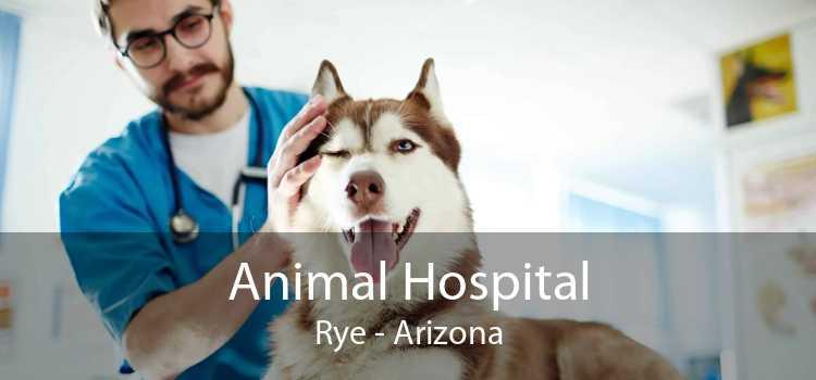 Animal Hospital Rye - Arizona