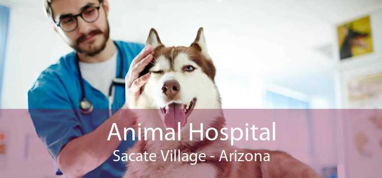 Animal Hospital Sacate Village - Arizona