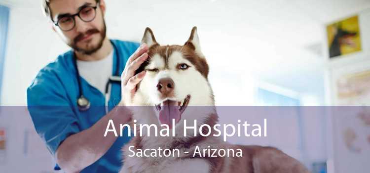 Animal Hospital Sacaton - Arizona