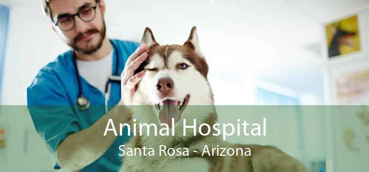 Animal Hospital Santa Rosa - Arizona