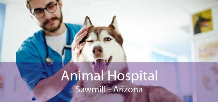 Animal Hospital Sawmill - Arizona