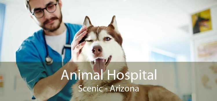 Animal Hospital Scenic - Arizona