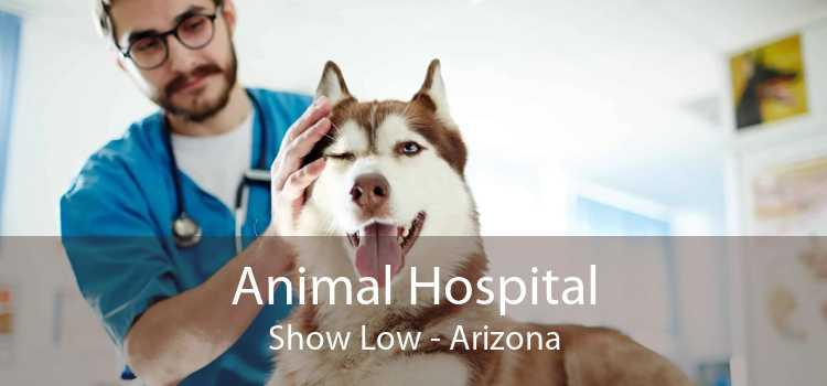 Animal Hospital Show Low - Arizona