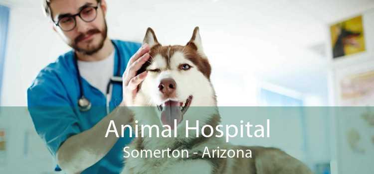 Animal Hospital Somerton - Arizona