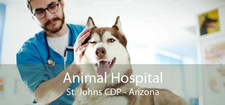 Animal Hospital St. Johns CDP - Arizona