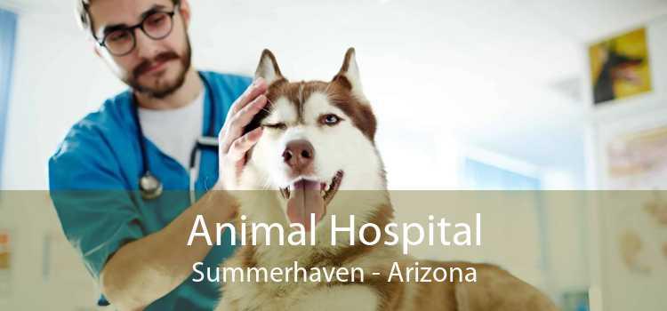 Animal Hospital Summerhaven - Arizona