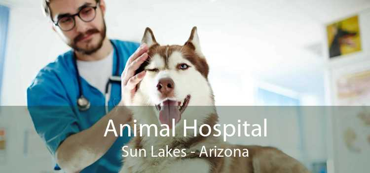 Animal Hospital Sun Lakes - Arizona