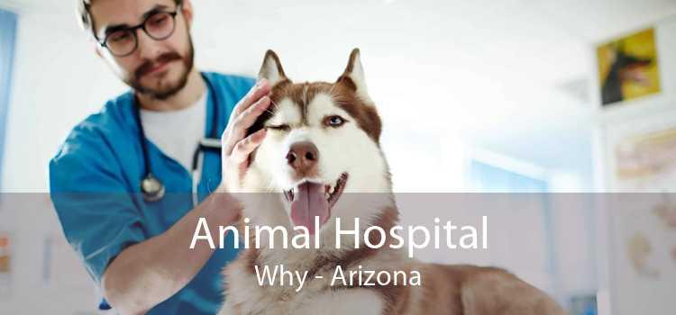 Animal Hospital Why - Arizona