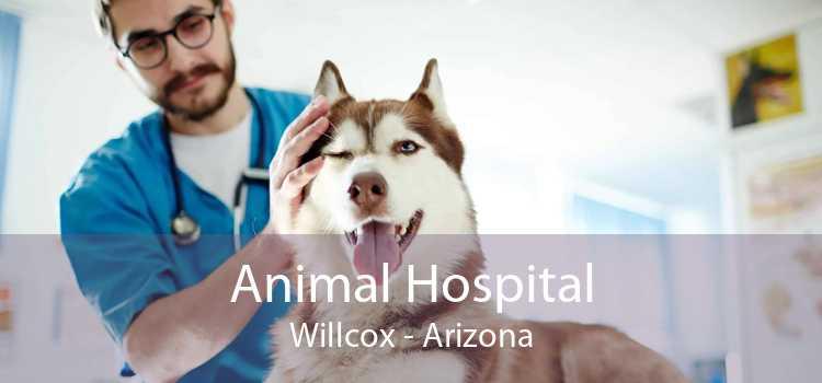 Animal Hospital Willcox - Arizona