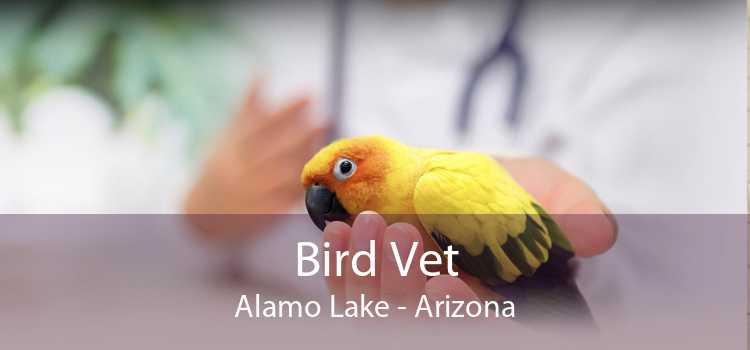 Bird Vet Alamo Lake - Arizona