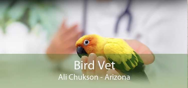 Bird Vet Ali Chukson - Arizona