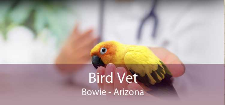 Bird Vet Bowie - Arizona