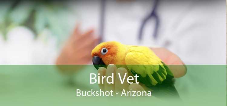 Bird Vet Buckshot - Arizona