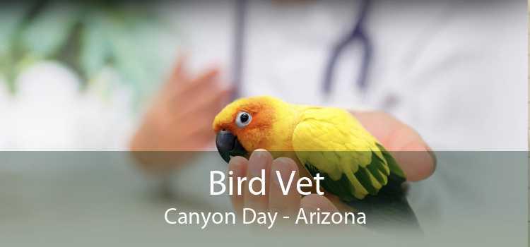 Bird Vet Canyon Day - Arizona