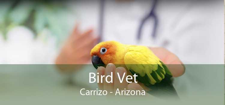 Bird Vet Carrizo - Arizona