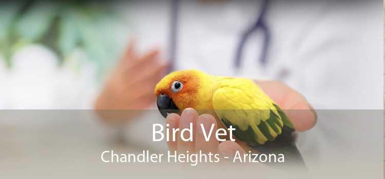 Bird Vet Chandler Heights - Arizona