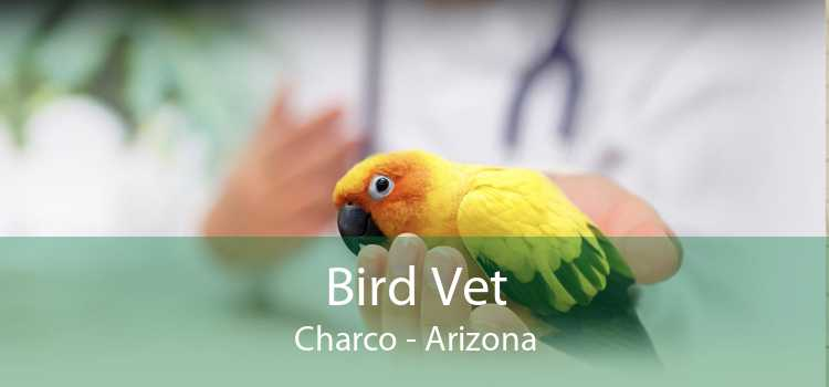 Bird Vet Charco - Arizona