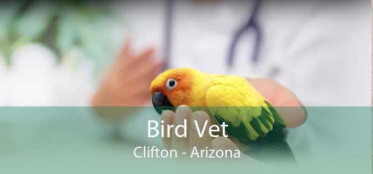 Bird Vet Clifton - Arizona