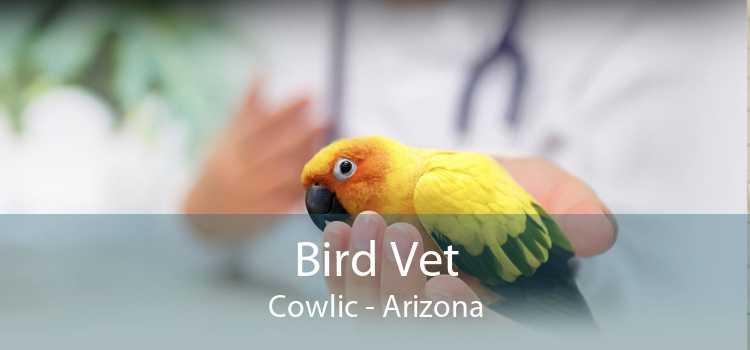 Bird Vet Cowlic - Arizona