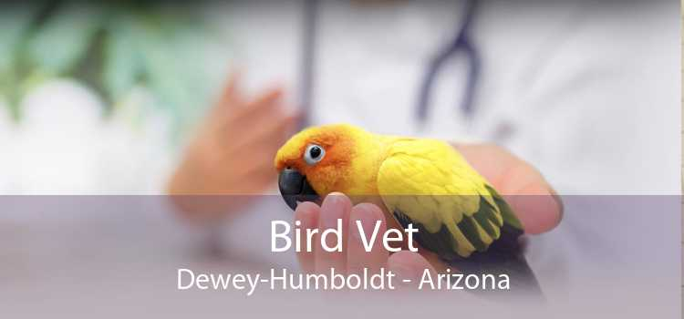 Bird Vet Dewey-Humboldt - Arizona