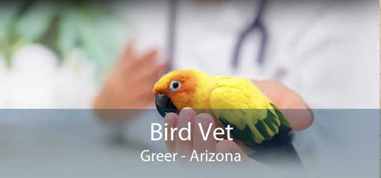 Bird Vet Greer - Arizona