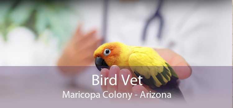 Bird Vet Maricopa Colony - Arizona