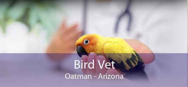 Bird Vet Oatman - Arizona