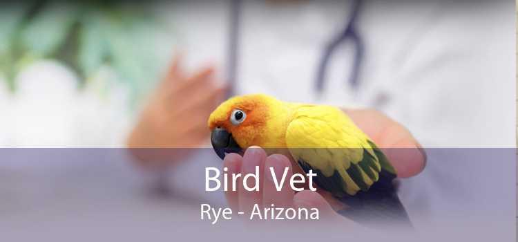 Bird Vet Rye - Arizona