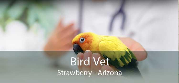 Bird Vet Strawberry - Arizona