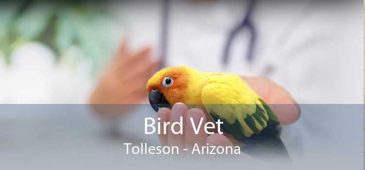Bird Vet Tolleson - Arizona