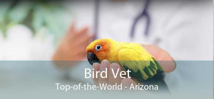 Bird Vet Top-of-the-World - Arizona