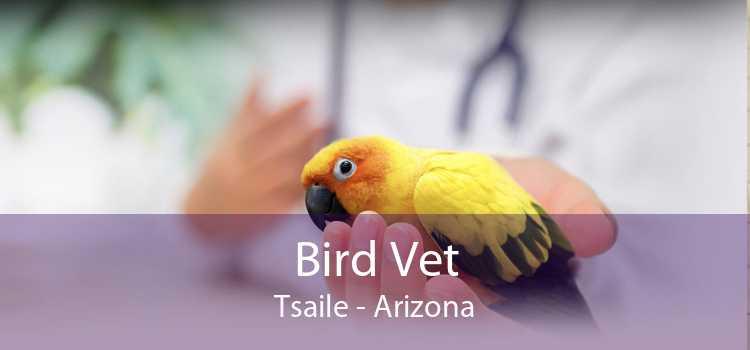 Bird Vet Tsaile - Arizona