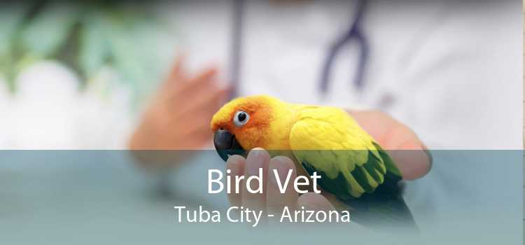 Bird Vet Tuba City - Arizona