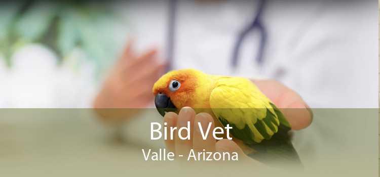 Bird Vet Valle - Arizona