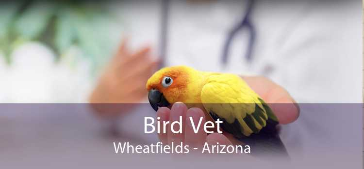 Bird Vet Wheatfields - Arizona