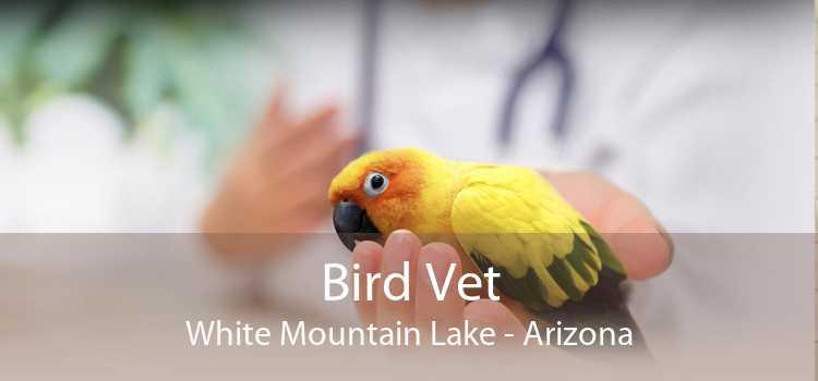 Bird Vet White Mountain Lake - Arizona