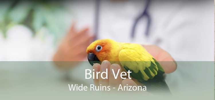 Bird Vet Wide Ruins - Arizona
