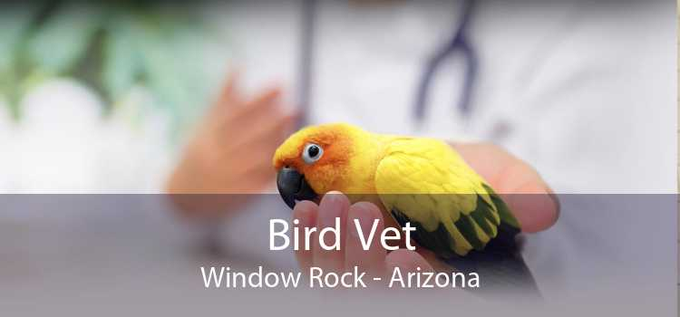 Bird Vet Window Rock - Arizona